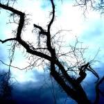 """""""Lightning Tree"""" by chickey"""