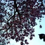"""Kitn Tree"" by chickey"