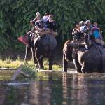 """Elephants crossing the Rapti - Chitwan, Nepal"" by ChristopherByrd"