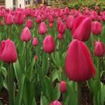 """""""springtime"""" by mindycokerblack"""