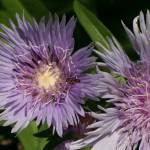 """""""flower w-ant"""" by reddswebb"""