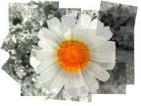 Flower in Squares