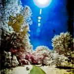 """""""Wandering Star"""" by etravus"""