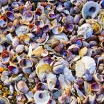 """""""see sea shells by the sea shore"""" by etravus"""
