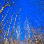 """Blue Sky"