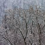"""through the woods"" by etravus"