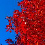"""""""Red On Blue"""" by etravus"""