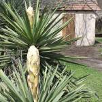 """Yucca stucco"" by HayleysMom1021"
