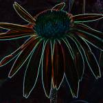 """Neon Echinacea"" by PuddingStoneAlley"
