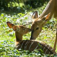 """Motherly Love"" by photocatphoto"