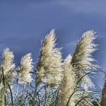 """""""Cattail"""" by johnfrench"""