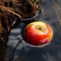Canal Apple