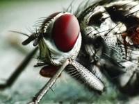 Hoverfly edited