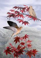 Doves and Japanese Maple