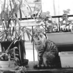 """""""City Cat"""" by jrotem"""