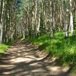"""Aspen Trail"" by maj"