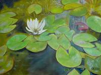 Lily Pads in My Pond