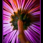 """Flower Power"" by MikeDargaPhotography"