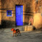 """Indian village stray dog"" by mellow"