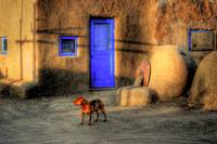Indian village stray dog