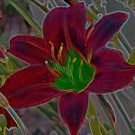 """""""Fleurs du Soleil: Solar Lilies #2"""" by Freeman_Photographic"""