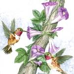 """""""Humming Birds Feeding"""" by ClotheslineArt"""