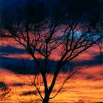 """Tree in Sunset #1"" by Freeman_Photographic"
