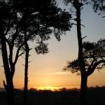 """""""Scots Pines in sunset"""" by Wildcam"""