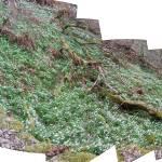 """Snowdrop Valley Composite"" by Wildcam"