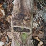 """""""Tree face"""" by Wildcam"""