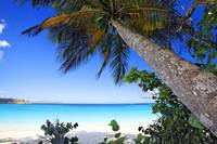 Leaning Palm Tree on a Tropical Beach