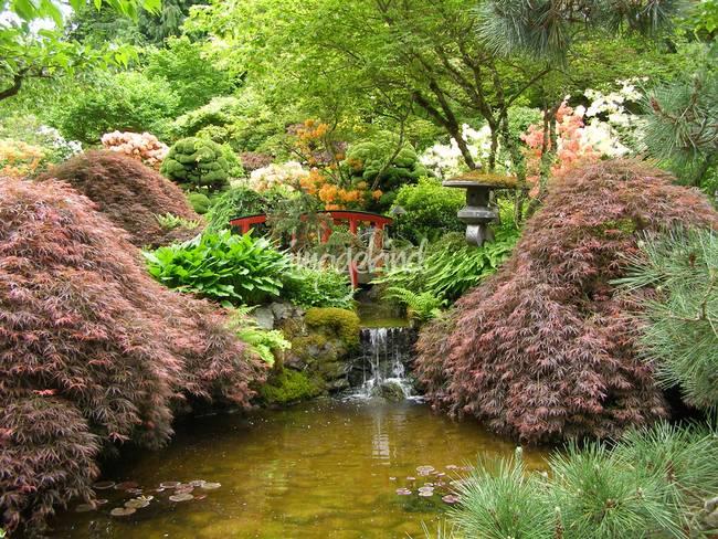 Stunning japanese artwork for sale on fine art prints for Japanese themed garden