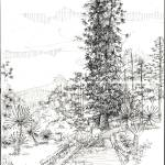 """old trees"" by sihanani"