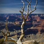 """Death on the Rim - Grand Canyon National Park, Ari"" by LBrummPhotography"