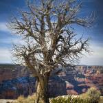 """Strength in Weakness - Grand Canyon National Park,"" by LBrummPhotography"