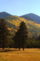 Lockett Meadow - Flagstaff Arizona