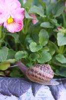 Edwin the Snail