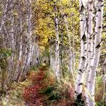 """acadia national park birch trail"" by RichardBaumer"