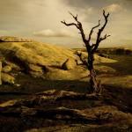 """""""on land (III)"""" by markjgaylard"""