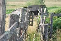 Old Cattle Chute