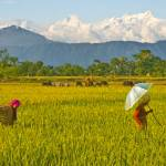 """The rice fields of Nepal"" by ChristopherByrd"