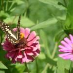 """Butterfly"" by KellyMonahan"
