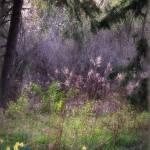 """""""joy of spring"""" by leezie5"""