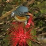 """Bird Playing With Flower"" by jackrosado57"