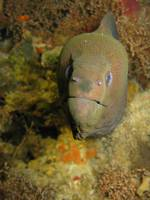 Menacing Moray Eel