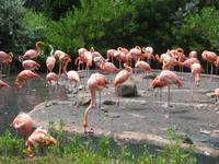 Flamingo water break