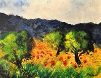 olive trees, poppies and provence