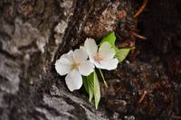 a flower growing out of a cherry tree 1
