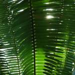 """""""Palm"""" by rbagwell"""