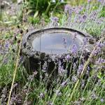 """""""Lavender bowl"""" by milesphotography"""